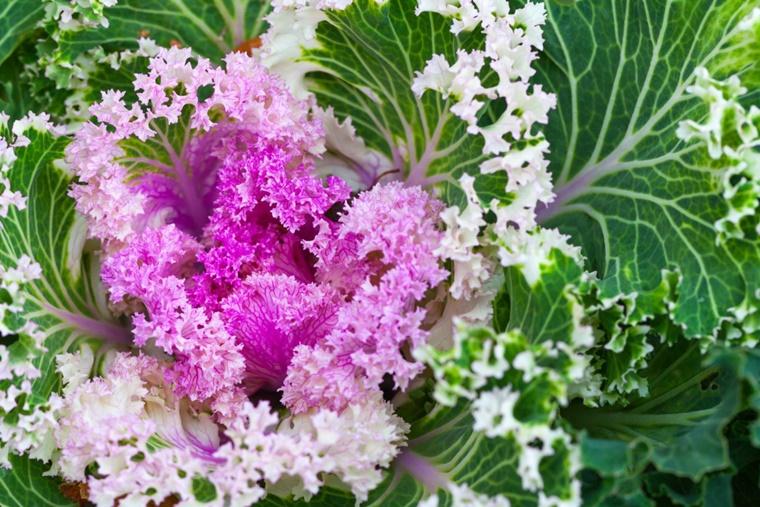 Giardino d 39 inverno consigli e idee per l 39 arredamento for Piante che fioriscono in inverno