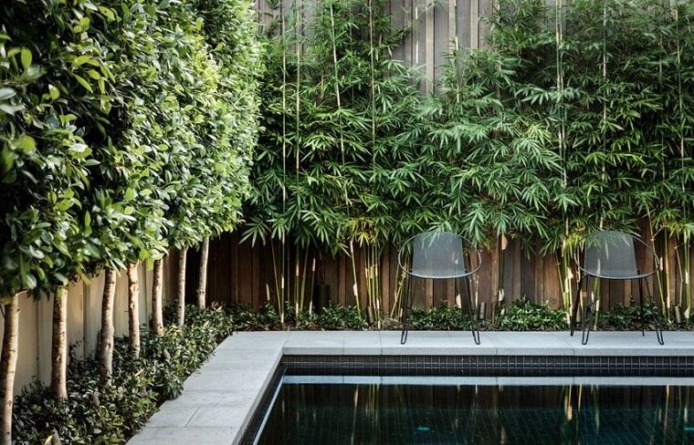piante da esterno barriera bamboo