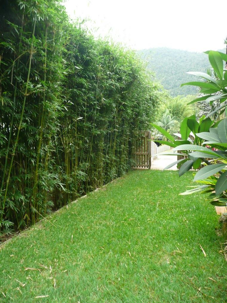 piante da esterno ideale privacy