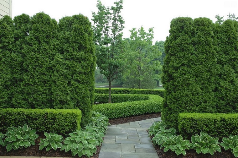 piante da esterno per privacy
