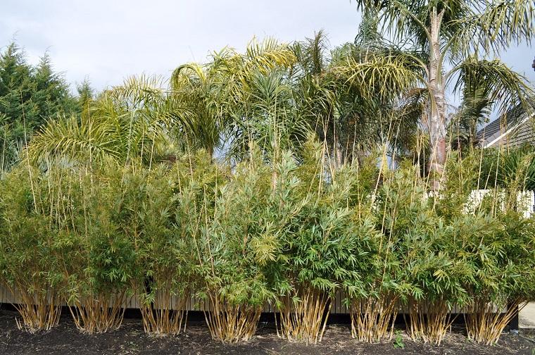 piante da esterno soluzione bamboo