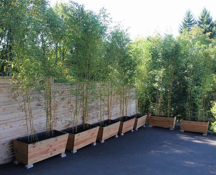 piante da siepe bamboo vasi