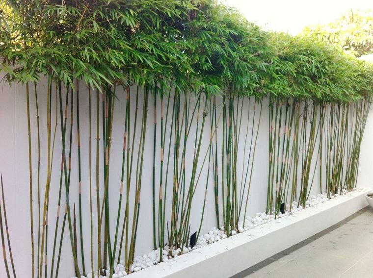 siepe bamboo muro recinzione