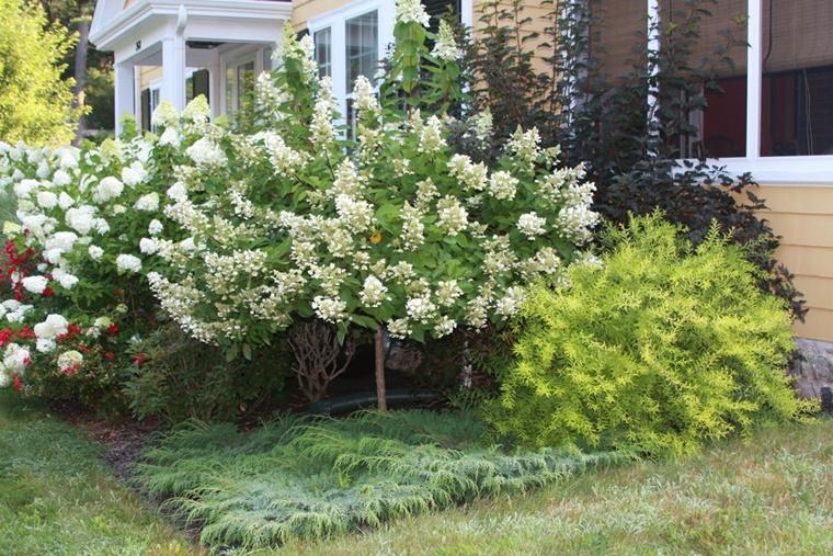 alberi da giardino alcuni consigli e suggerimenti per lo