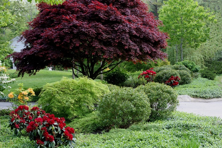 Alberi da giardino alcuni consigli e suggerimenti per lo spazio verde - Foto di alberi da giardino ...