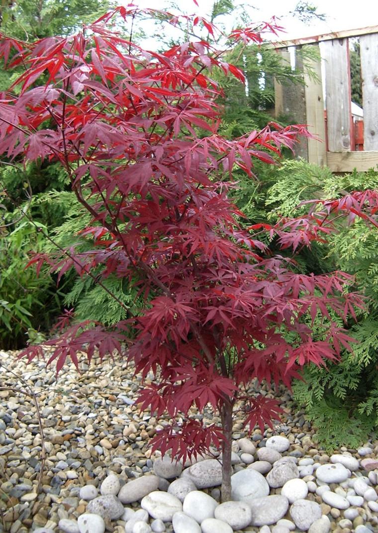Alberi da giardino alcuni consigli e suggerimenti per lo - Piccolo giardino giapponese ...