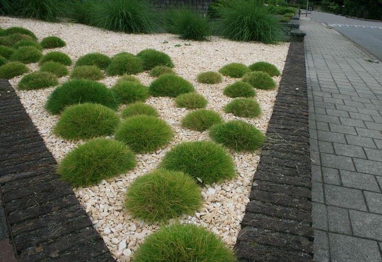 Giardini idee semplici e pratiche per la manutenzione for Giardini idee piante
