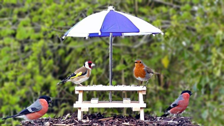 la mangiatoia casetta mangime uccelli