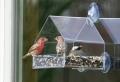 La mangiatoia – ecco come fare una simpatica casetta per gli uccelli