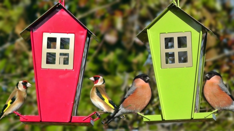 la mangiatoia uccelli casa speciale