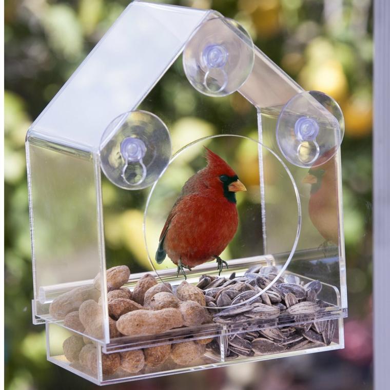 mangiatoia per uccelli forma particolare trasparente