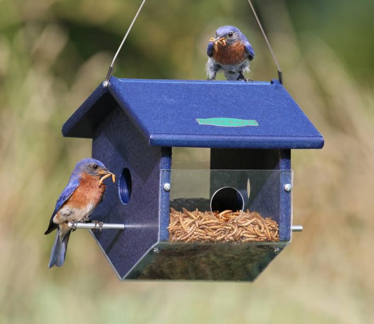 mangiatoia per uccelli pratica utile colorata