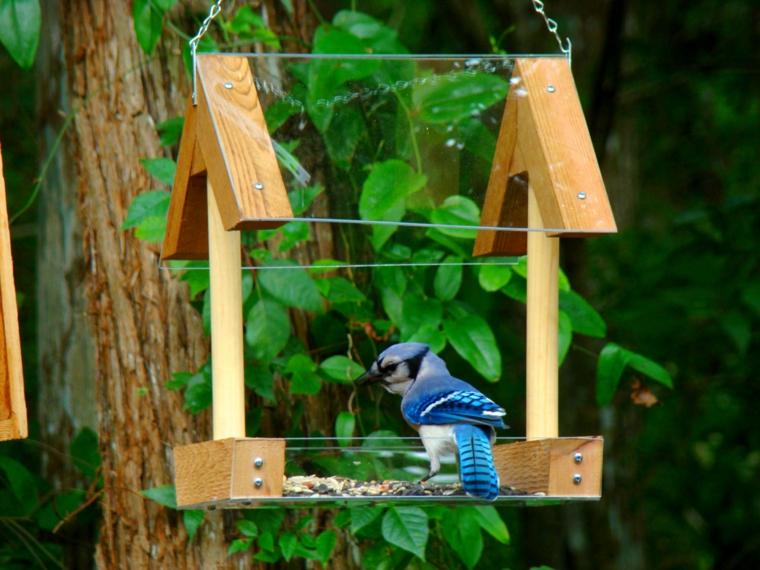 mangiatoie per uccelli speciali idee semplici