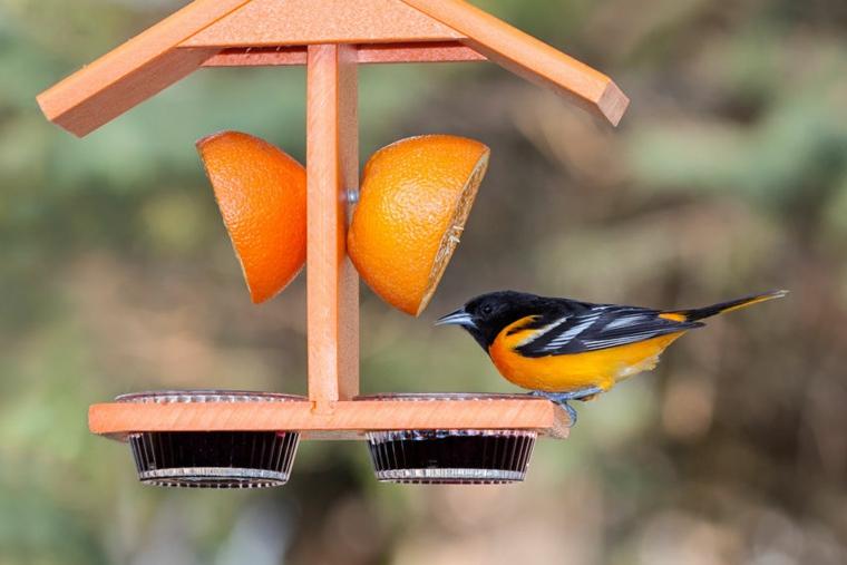 particolare vivace mangiatoia uccelli pratica