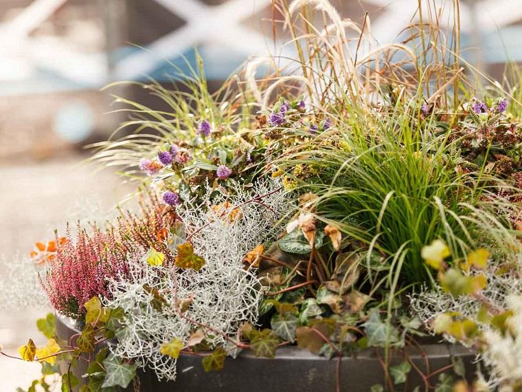 piante autunnali balcone erica edera