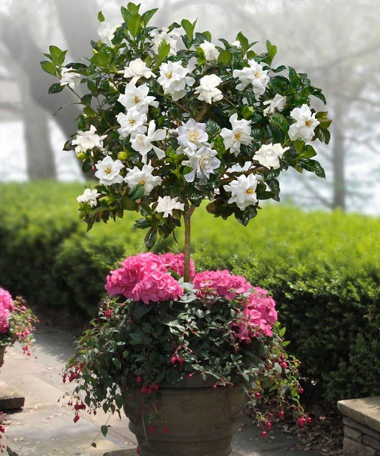 piante autunnali piante gardenia bianca fucsia