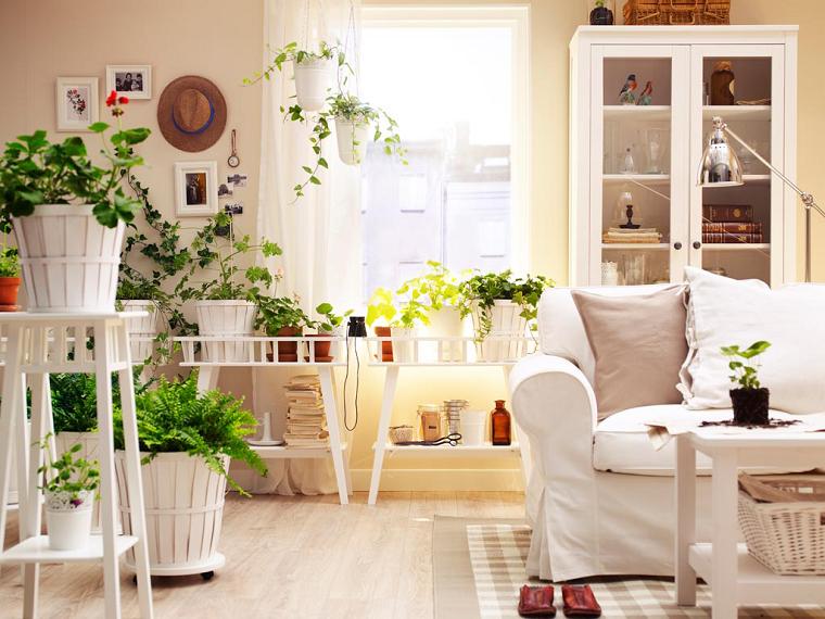 piante da appartamento decorazioni eleganti