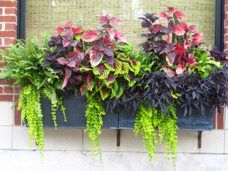 Porta Piante Da Balcone : Piante da balcone le specie autunnali più belle per