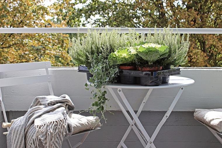 piante da balcone autunnali eriche cavoli