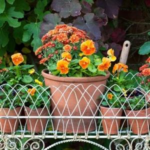 Piante da balcone: le specie autunnali più belle per decorare lo spazio esterno