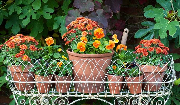 piante da balcone autunnali gialli arancioni