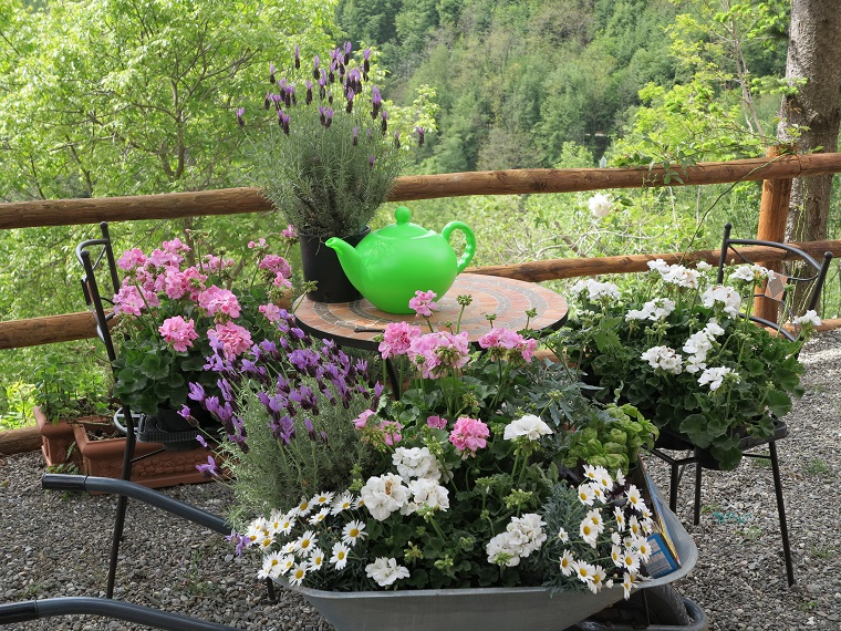 piante da balcone autunnali margherite ciclamini