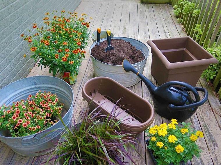 piante da balcone autunnali margherite crisantemi
