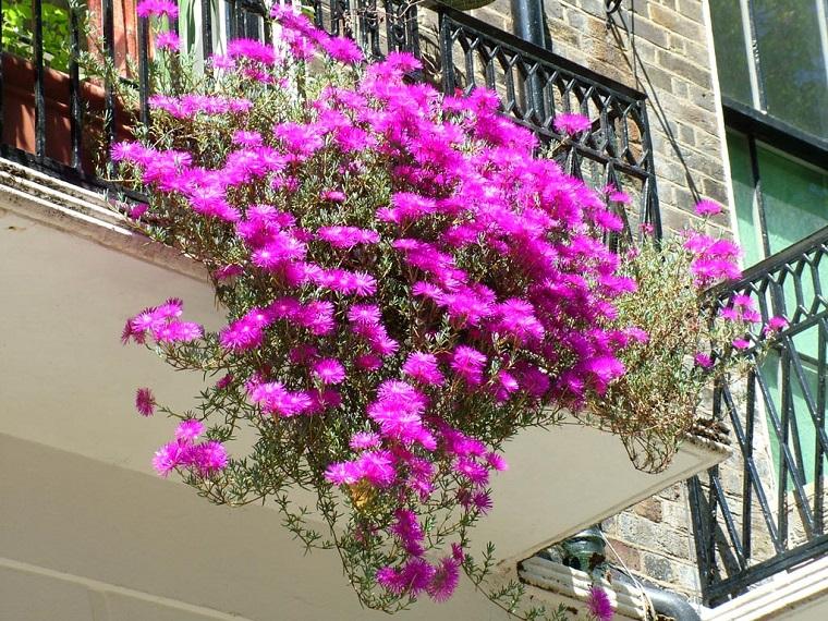 piante da balcone autunnali mesembryanthemum