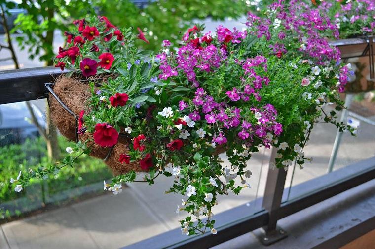 piante-da-balcone-autunnali-selezione-fiori