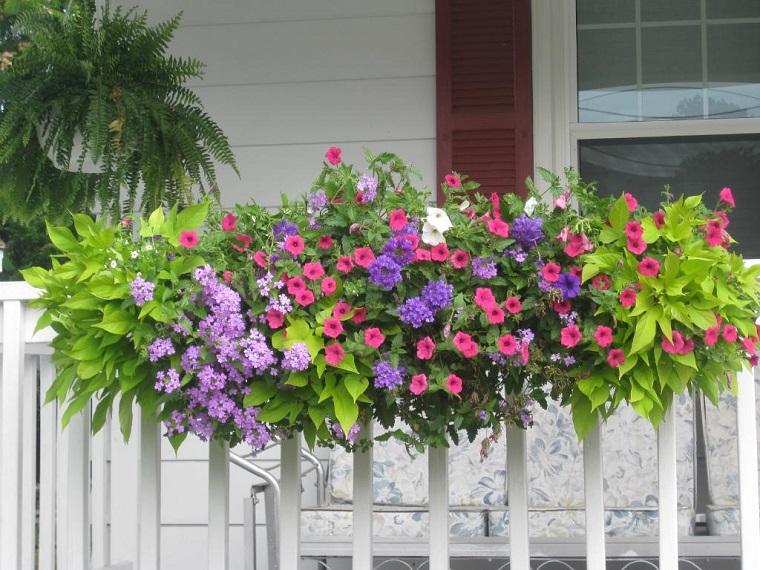 piante da balcone autunnali variopinti