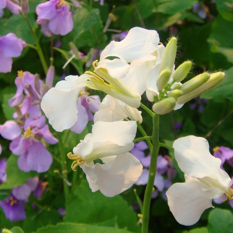 piante da balcone orchidee bianche viola