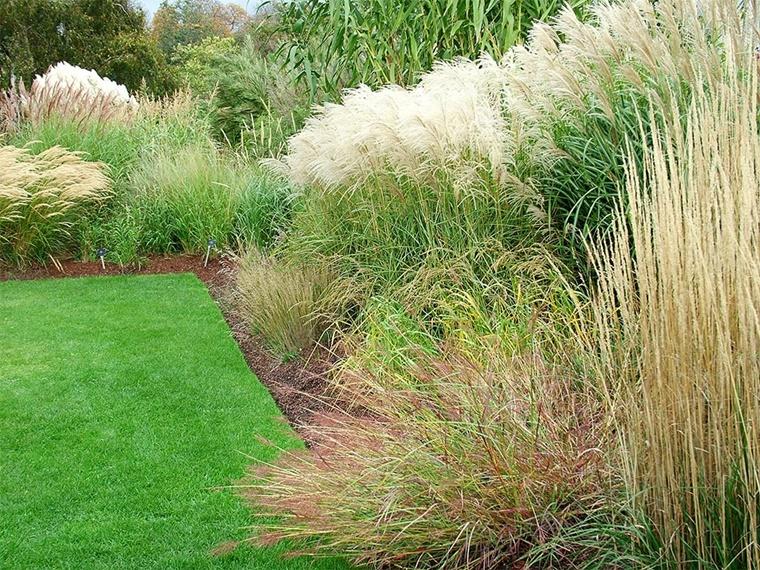 piante da giardino erba fontana