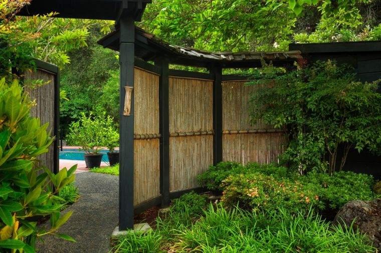 piante da giardino esotico bambu