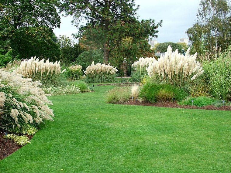 piante da giardino grande erba fontana