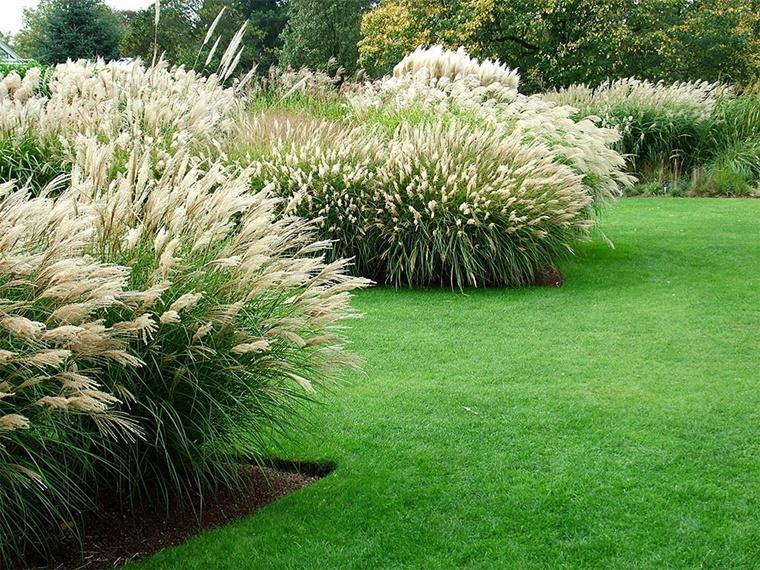 piante da giardino ornamentale sempreverde