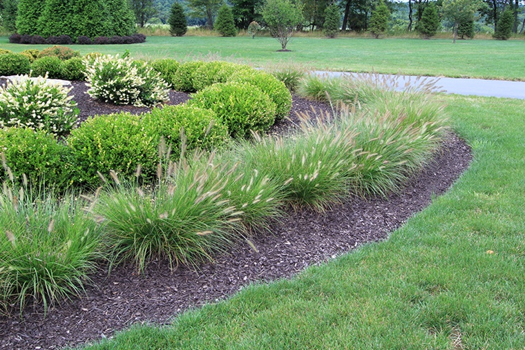 Piante da giardino idee per un nuovo look veramente for Piante verdi da giardino