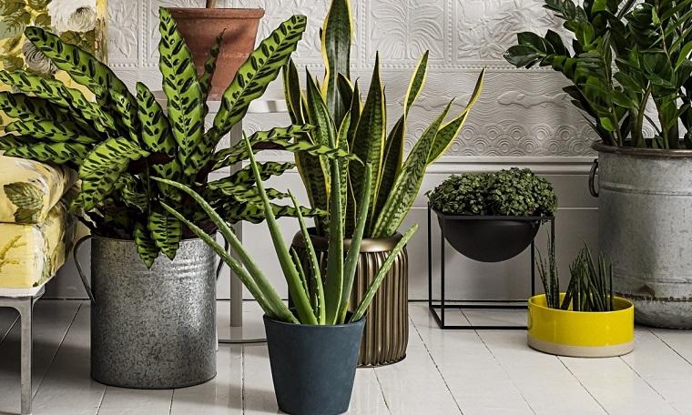 piante da interni varie specie