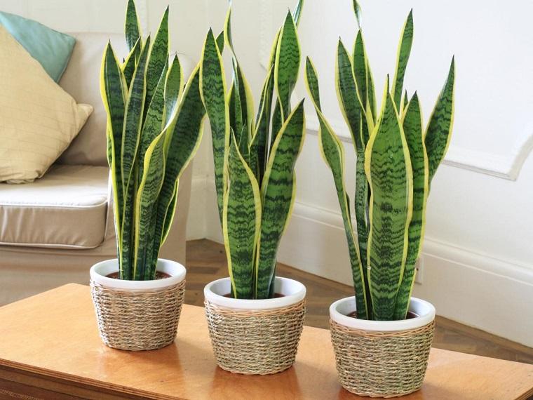 piante da interno vasi decorati