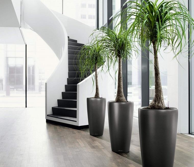 piante da interno abbellire corridoio