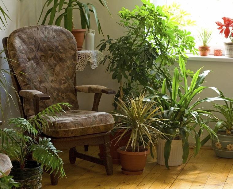 piante da interno arredare zona relax