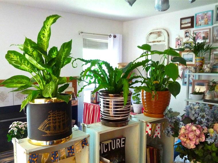 piante da interno decorazione separe