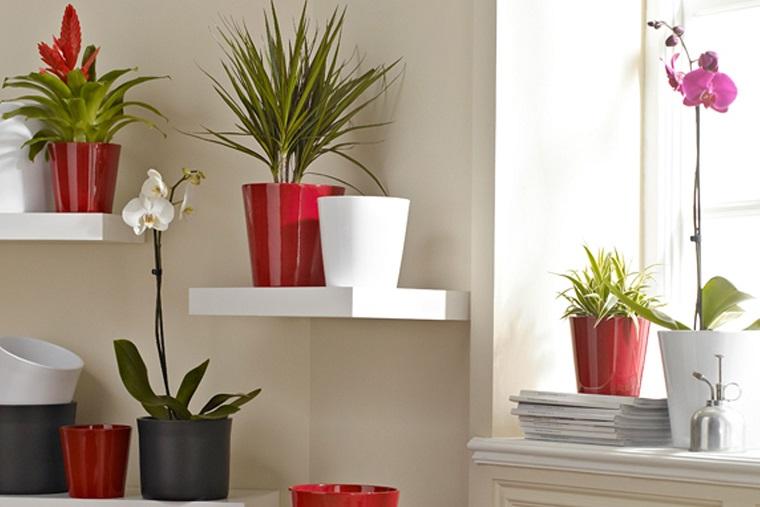 piante da interno vasi colorati