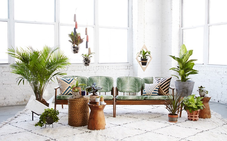 piante d'appartamento abbellire living moderno