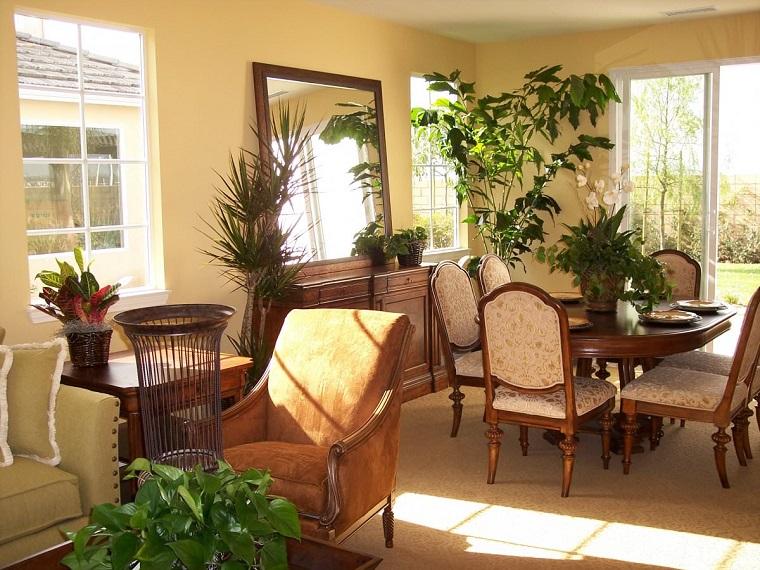 piante d'appartamento abbellire salotto