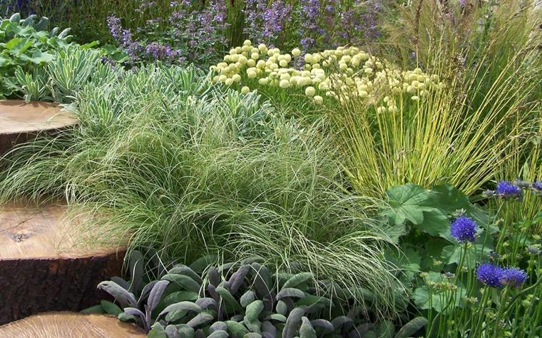 piante ornamentali da giardino scalini tronchi legno