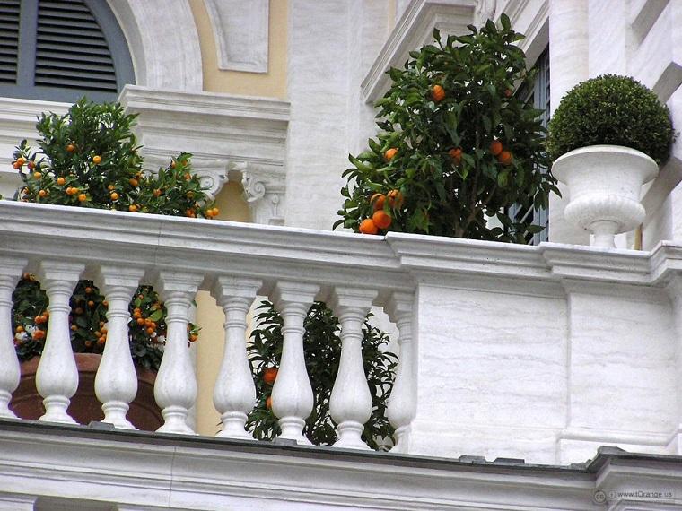 piante per balcone autunnali boxus aranci