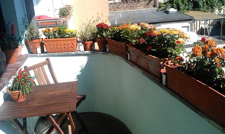 piante per balcone autunnali crisantemi peperoncino