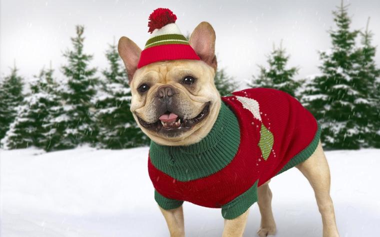 abbigliamento per cani invernale ultima moda