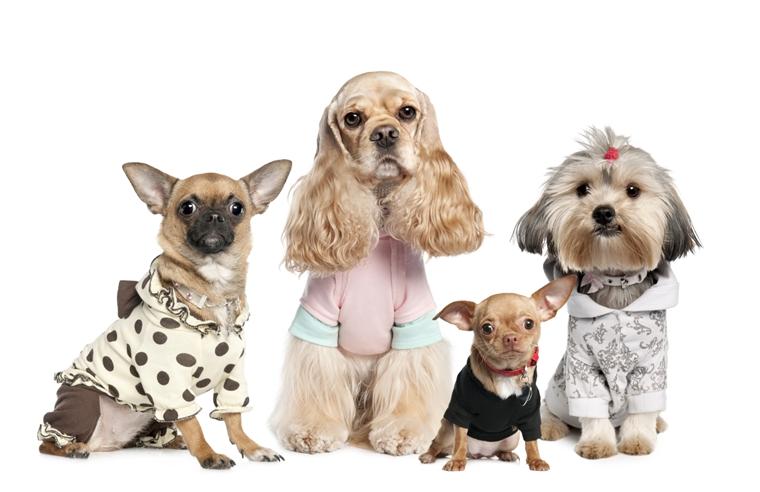 abbigliamento per cani varie forme taglie