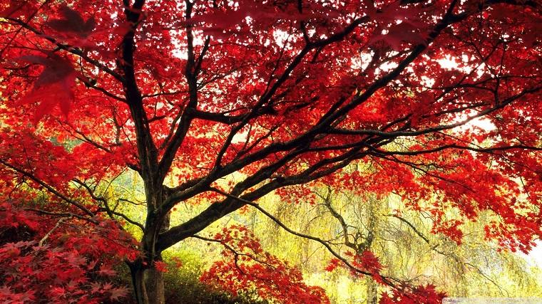 Acero giapponese la leggenda e alcuni consigli per farlo for Acero giapponese